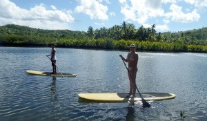 Stand-up Paddle boarding from the mangroves area to Malinao beach