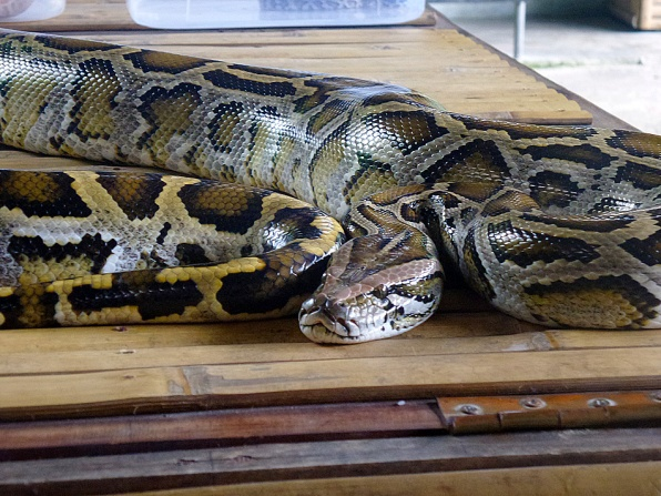 I can't believe I touched a snake. I then realized that I don't like snake.