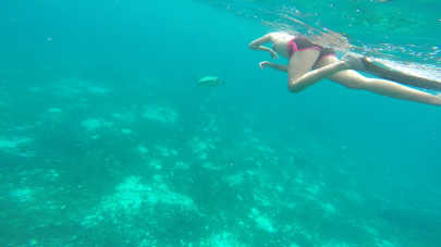 Trying to swim with the sea turtle