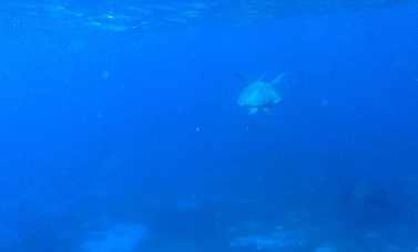 I think it was highway robbery what happened to us at Balicasag but seeing and swimming with some sea turtles made it all worth it